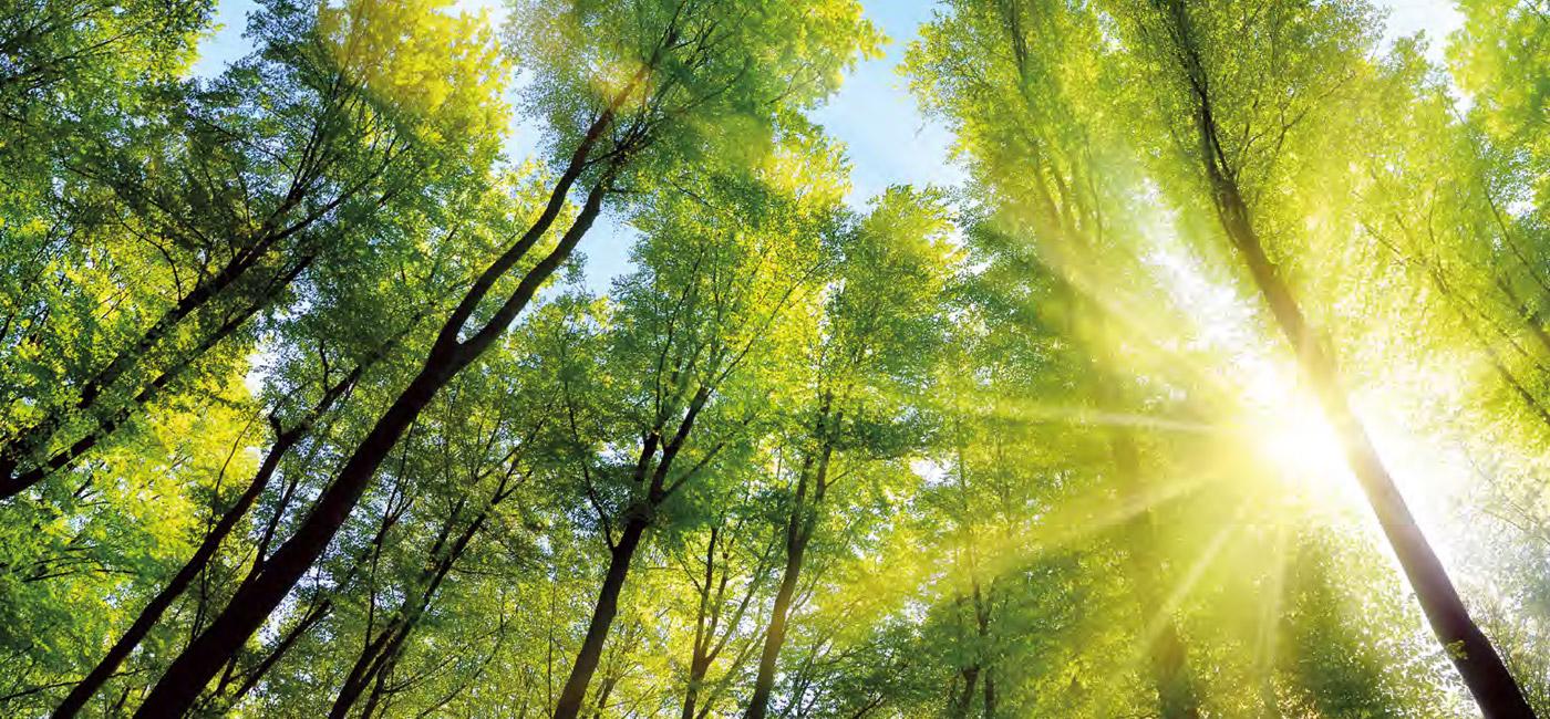 Ecosostenibilita-591d7b469273e1.jpg
